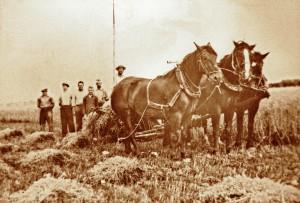Jan (Gelders), Siem Bax van oom Adriaan, vader Aart Bax, broer Siem Bax en Willem vd Broek (Gelders). Zij zijn hier bezig met een zelfbinder met drie paarden ervoor en de garven worden gelijk op een schoof gezet.